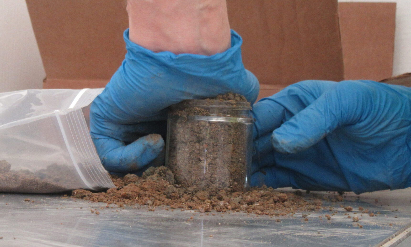 Blue latex gloved hands pushing down soil in a clear, glass container